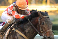 Suddenbreakingnews skips the 2016 Preakness Stakes